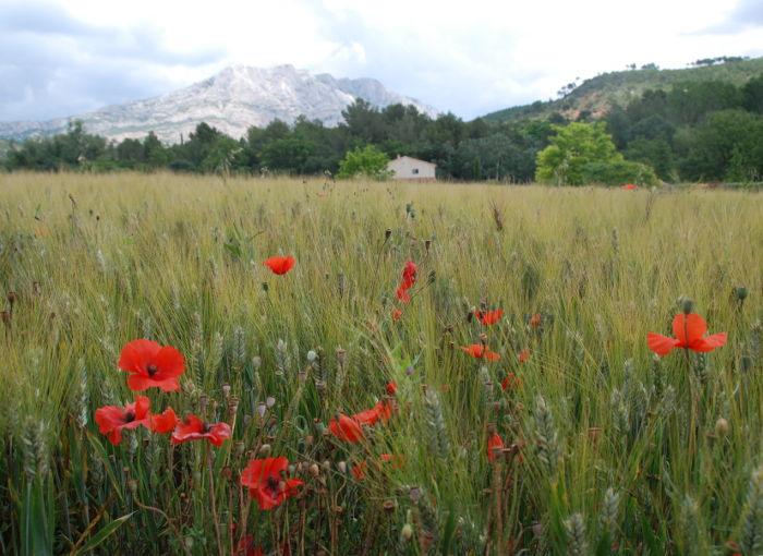 Field near Beaurecueil, E of Aix-en-Provence